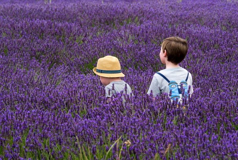 Enfants dans un champs de lavande