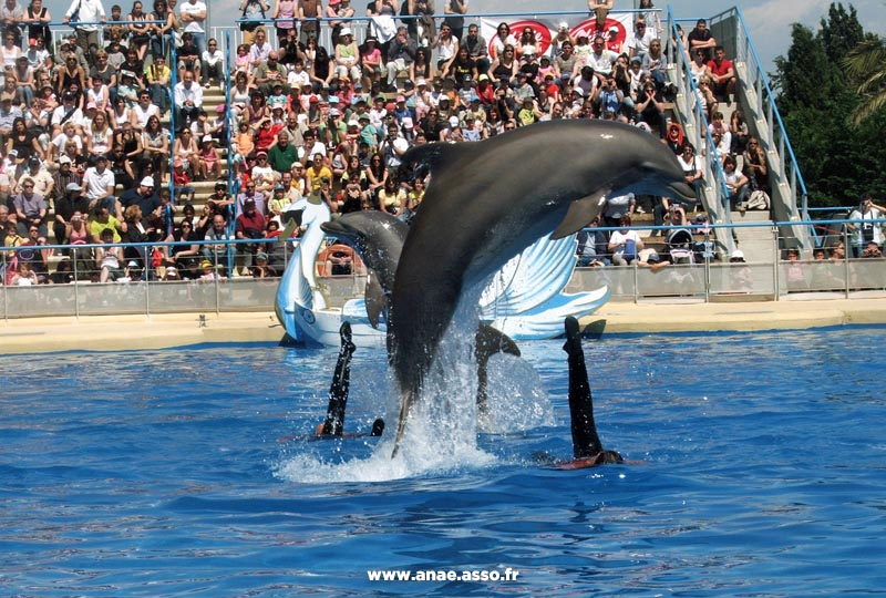anae-classe-decouverte-mer-hyeres-parc-marineland-bassin-dauphin