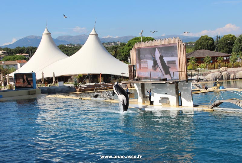 anae-classe-decouverte-mer-hyeres-parc-marineland-bassin