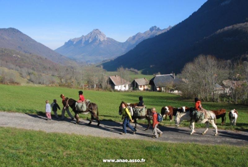 Balade avec des ânes lors d'une classe verte