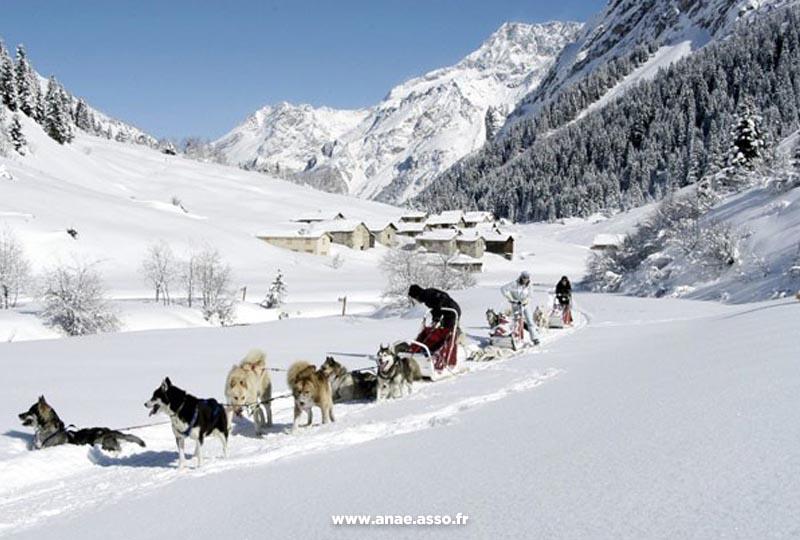 sejour-adapte-handicap-montagne-activite-chiens-de-traineaux