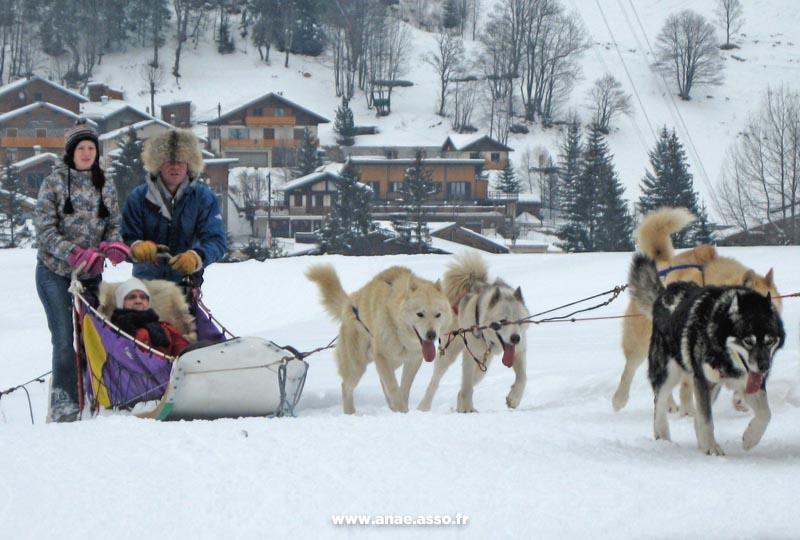 Balade PMR en chiens de traîneaux